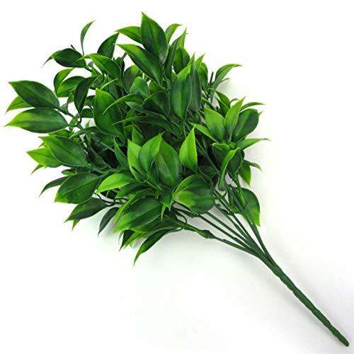 QFDM Succulent Plants 7 Niederlassungen...