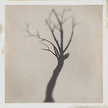 The Danger Tree - EP