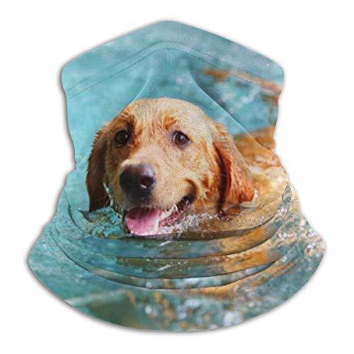 WCUTE Bufanda de Polaina para el Cuello Labrador Retriever...