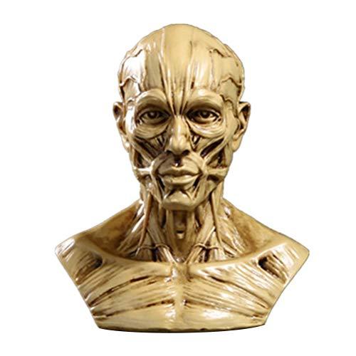 TOYANDONA Kopf Anatomie Halbmenschliches Modell Handwerk Harz Schädel Skulptur Kopf Muskeln Knochen für medizinische Künstler Zeichnung Studium Büro Bar Desktop Figur Dekoration (Beige)