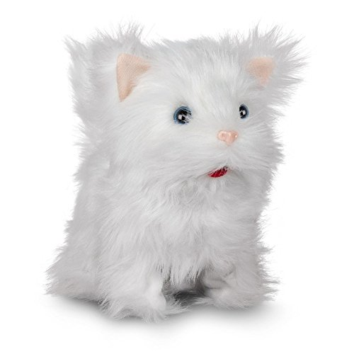 Süßes Kätzchen / Kuschelige Katz...