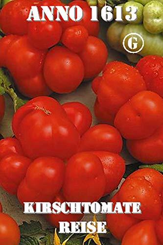 Thysanotusversand Reisetomate 8 Samen
