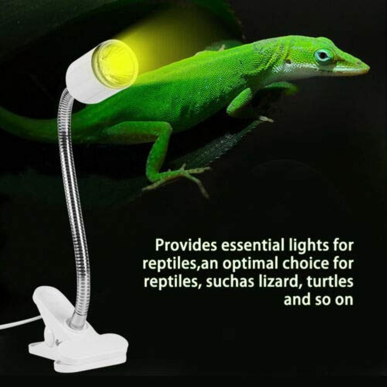 FidgetKute 25 50 75W Flexible Reptile Lizard Turtle Basking Heat Light Lamp Holder UV Bulb 25W Heating Light & White Light Holder