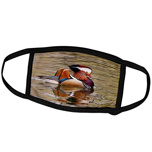 3dRose China, Beijing, Male Mandarin Duck Swimming in Pond - AS07. - Face Covers (fc_132359_2)