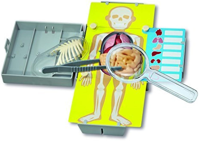 tienda 4M Human Organs Organs Organs Learning Kit by 4M  descuento de ventas