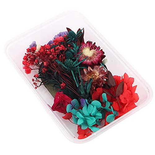 Doans 1 Caja De Coloridas Flores Secas para Joyería con Velas Perfumadas, Flores Secas Naturales Puras para Hacer Jabón Marcadores Álbumes De Recortes Decoración De Álbum De Fotos First-Rate