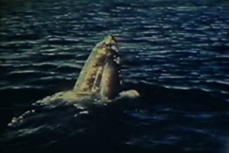 Marine Biology Research: The California Gray Whale (1970s)