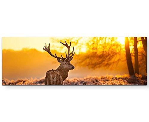 Eau Zone Wandbild auf Leinwand 120x40cm Hirsch im Morgenlicht