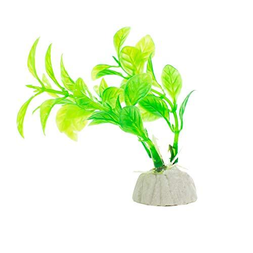 DIGIFLEX 10 x verschiedene Aquariumpflanzen Aquarien - 5