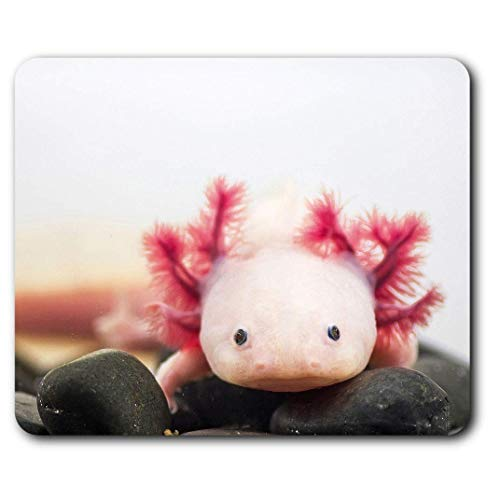 Komfortable Mausunterlage - Axolotl Aquarium Drachenfisch für Computer & Laptop, Büro, Geschenk, rutschfeste Unterlage