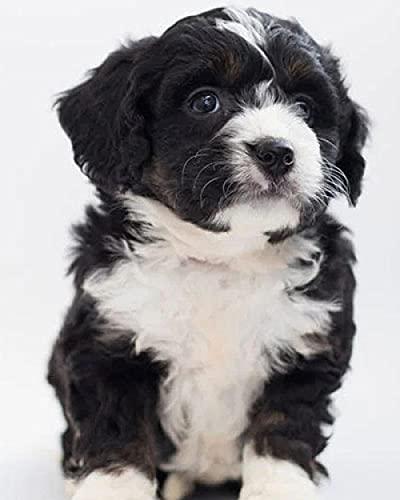 Verf op nummers voor volwassenen zwart en wit puppy digitale oliedoek schilderij kits voor volwassenen kinderen…