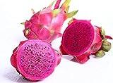 Semillas de Fruta de La Pitaya, 30pcs Semillas Frutales Comestible Fruta Exótica para Granja, Huerto, Jardín Balcon Interior y Exteriores (Morado)