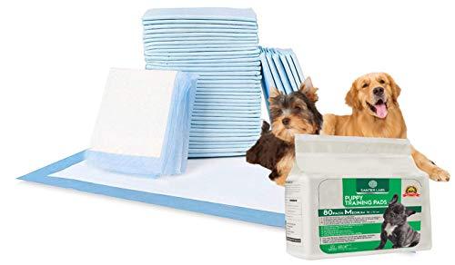 SANTER LABS Empapadores Entrenamiento Perros Mascotas Toallitas Alfombrilla higiénica SuperAbsorvente de 5 Capas Protector de Malos olores Tamaño Regular (58x56 cm) (Unidades, 80 Unidades)