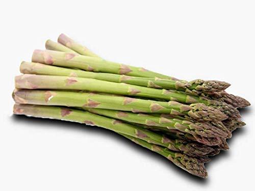 25 graines - ASPERGE dArgenteuil hâtive - Asparagus officinalis