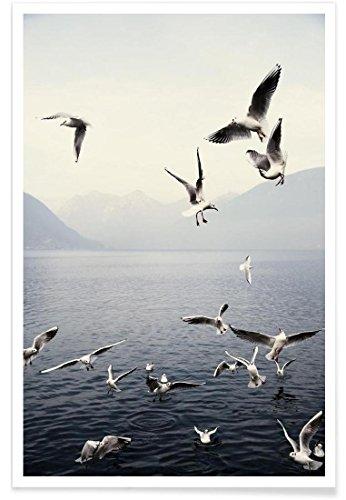"""JUNIQE® Ozeane, Meere & Seen Möwen Poster 20x30cm - Design """"Seagulls"""" entworfen von Laura Palm"""