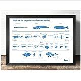 YQQICC Ciencia popular El tamaño y el tipo de vida marina Impresión de arte de la pared Pintura de la lona Cartel de la imagen Decoración de la habitación del acuario-40x60cm Sin Marco