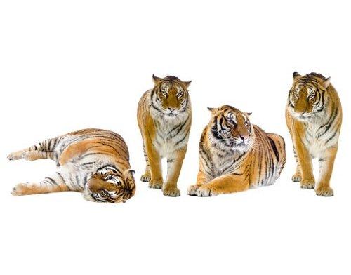 Wandtattoo No.167 Tiger Set II Tiger Tier Savanne Afrika Katze Tiger