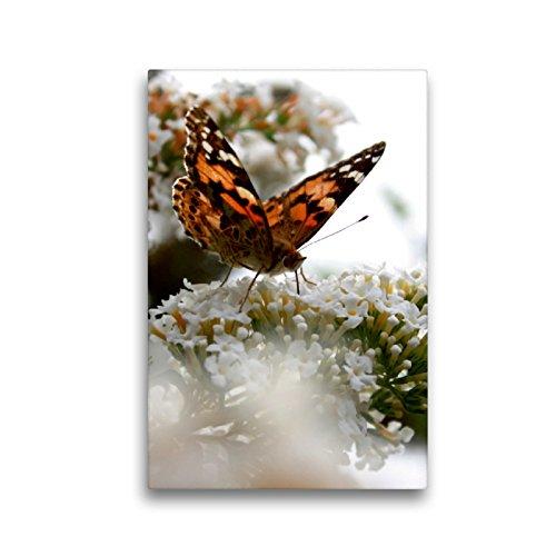Premium Textil-Leinwand 30 x 45 cm Hoch-Format Schmetterling | Wandbild, HD-Bild auf Keilrahmen, Fertigbild auf hochwertigem Vlies, Leinwanddruck von Christine Bässler