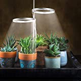 Double Head LED Succulents Grow Light Set- Full Spectrum Plant Growing Lamp with 24H Cycle Auto Timing Switch Adjustable Annular Light Ring with Acrylic Supporter for Garden Potted Plant Seed Starting