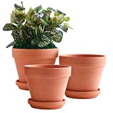 YISHANG 8 Inch Clay Pot for Plant with Saucer - 3 Pack Large Terra Cotta Plant Pot with Drainage Hole, Clay Planters Pot, Terracotta Pot for Indoor Outdoor Plant,Round Flower Planter Pots for Plants