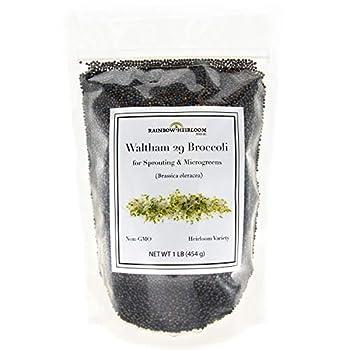Broccoli Seeds for Sprouting & Microgreens   Waltham 29 Variety   Non GMO & Heirloom Seeds   Bulk 1 LB Resealable Bag   Rainbow Heirloom Seed Co.