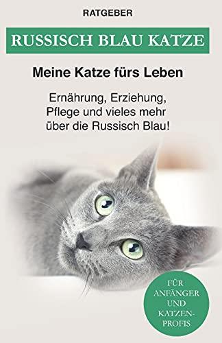 Russisch Blau Katze: Ernährung, Erziehung, Pflege, Charakter und vieles mehr über die Russisch Blau!