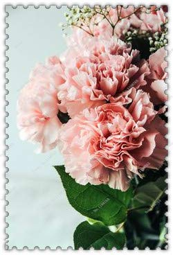 200Pcs/Bag Available Carnation Seeds Balcony Potted Courtyard Flower Seeds,Bonsai Plant Home Garden