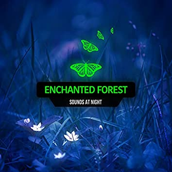 Enchanted Forest Sounds At Night