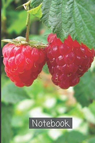 Raspberry Notebook: A lined personal writing notebook to write down memories, ideas, goals, notes, and new habits | Blank lined Diary Abstract ... (Raspberry Notebook and Journal, Band 44)