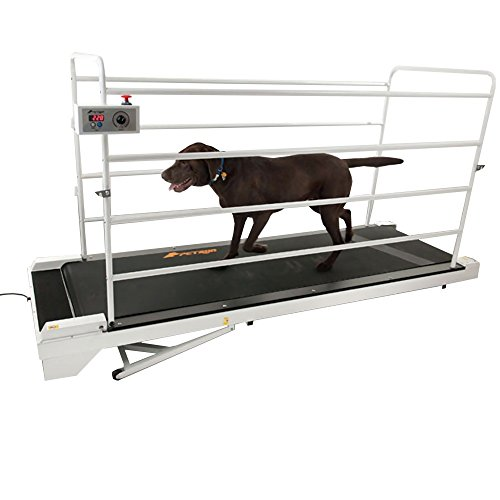 GoPet Treadmill Giant