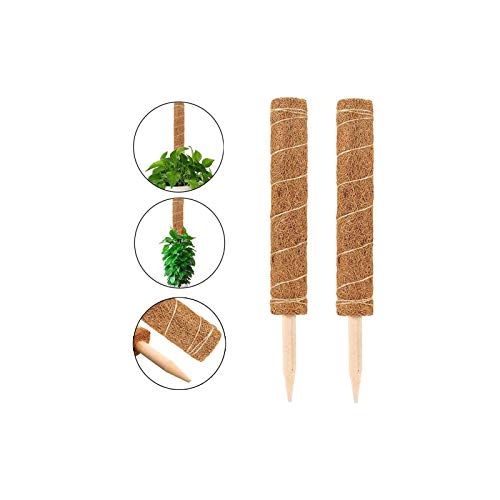 Wenxiaw Pflanzstäbe Kokosstab Pflanzenstütze Moss Pole Blumenstab Kokosstab Moosstab aus Natürlicher Kokosfaser für Haus Garten Pflanzenunterstützung Klettern Zimmerpflanzen Creepers, 30 cm, 2 Stück