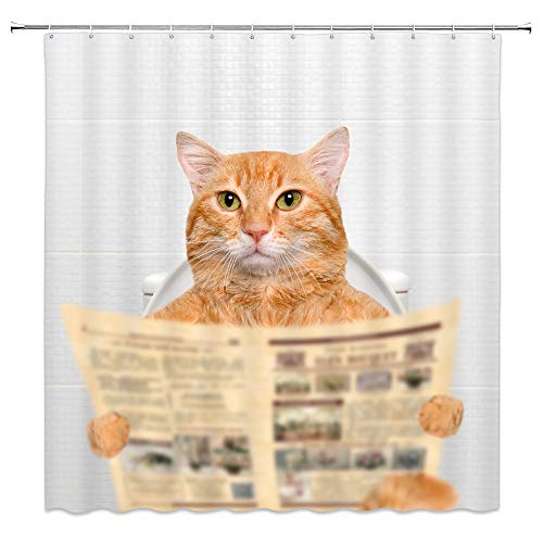 Funny Cat Reading the Newspaper