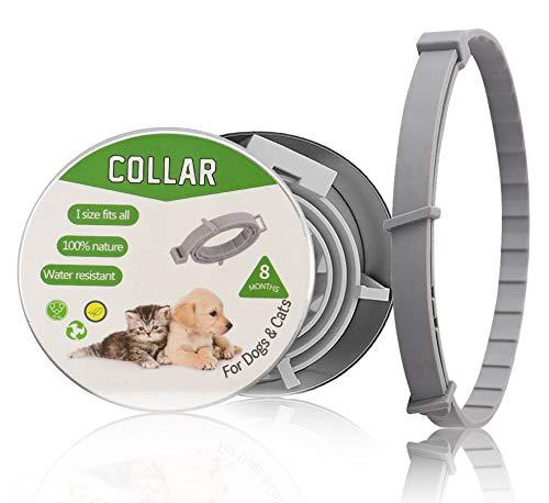 2020 Nuevo collar de perro, collar de mascota cadena telescópica para gato y perro pequeño (gris)