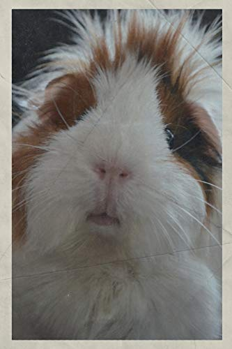 Notebook: Cavy Pet Gorgeous Composition Book Daily Journal Notepad Diary Vintage Retro Poster style for Researching Cavies Guinea Pig Cages