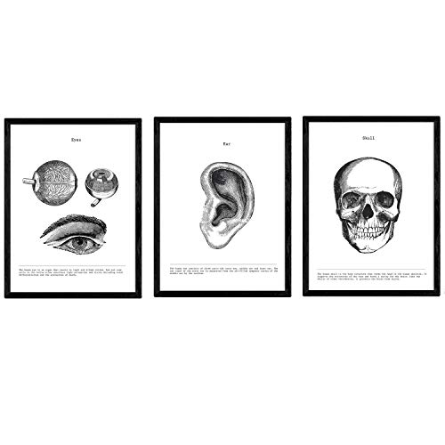 Nacnic Set de 3 Posters de anatomía en Blanco y Negro con imágenes del Cuerpo Humano. Pack de láminas sobre biología con Ojos, Oreja y Cráneo. Tamaño A3. con Marco.