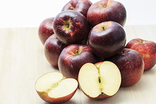 【・農園より産地直送】小山果樹園の秋映 プレミアム(贈答用・特選品質) 約9kg24〜40個入