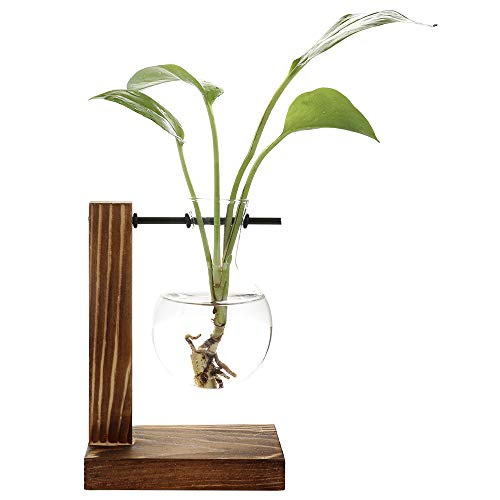 Belupai - Jarrón para plantas hidropónicas vintage con marco de madera transparente y marco de cristal, decoración de bonsái para el hogar, 1 jarrón de bombilla.