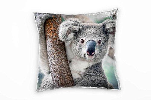 Paul Sinus Art Tiere, Koalabär am AST,...