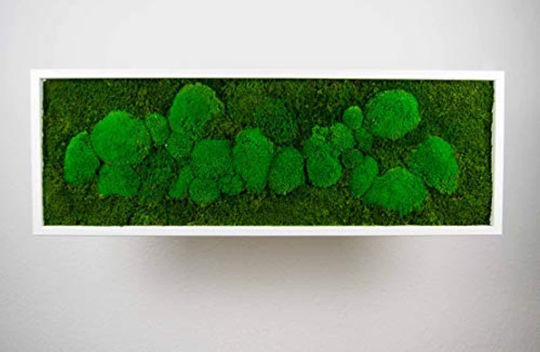 Moosbild Pflanzenbild mit Kugelmoos und Flachmoos versch. Mae günstig (Wei, 100x35 cm)