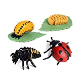 Hiawbon Insect Ladybug Growth Cycle Figurine Ladybird Life Cycle Model - 4 Piece Set Shows Life Cycle of A Cute Ladybug