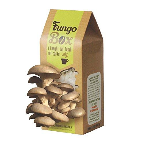 Fungobox Set für Pilzkultur zur Anzucht von Austern-Seitlingen (essbar und schmackhaft) aus Espressosatz, ideales Geschenk