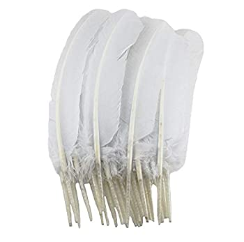 Best white turkey feathers Reviews