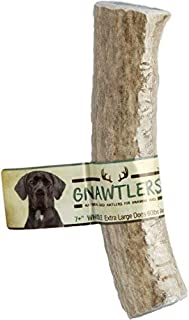 Pet Parents Gnawtlers - Premium Elk Antlers for Dogs, Naturally Shed Elk Antlers, All Natural Elk Antler Chews, Specially Selected from The Rocky Mountain & Heartland Regions - Elk Antlers for Dogs