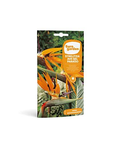 Eurogarden - Semillas de Flores (Strelitzia Ave del Paraíso)