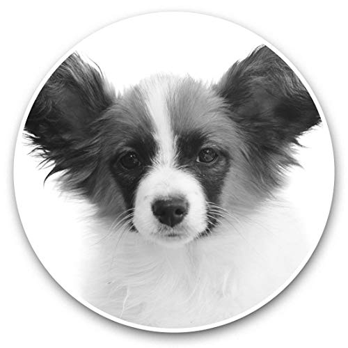 Impresionantes pegatinas de vinilo (juego de 2) 25 cm bw – Papillon perro cachorro lindo divertido niños pegatinas divertidas calcomanías para portátiles, tabletas, equipaje, reserva de chatarras, neveras, regalo fresco #43614