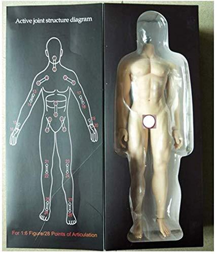 ZSMD 1/6 Männlicher Körper Starker Muskel Edelstahl Skelett Geeignet Für Anzieh HT VERYCOOL TTL PHICEN TBLeague (Normal Color)