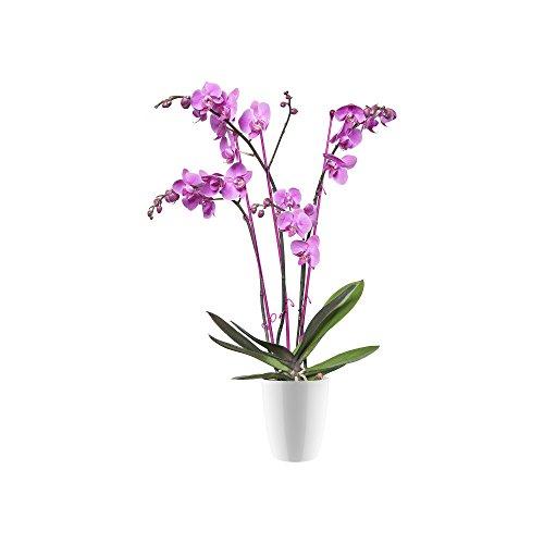 Elho Brüssels Diamond Orchidee hoog 10,5 - bloempot - wit - binnen Flowerpot. 10.5 cm wit