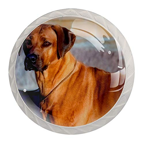 Pomos de cocina Rhodesian Ridgeback para perros, de cristal de cristal, con múltiples diseños, tiradores de cajón de 1.18 pulgadas (4 unidades)