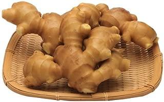 高知県産 黄金生姜(こがねしょうが) 1kg