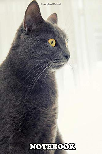 Notebook: Gray Cat With Yellow Eyes , Journal for Writing, College Ruled Size 6' x 9', 110 Pages